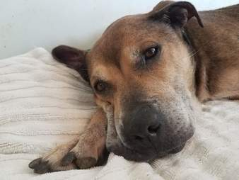 Neglected senior dog gets first bed