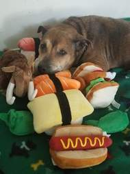 Arthritic senior dog saved from neglect gets first toys