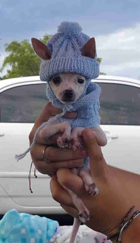Rescued dog in hat