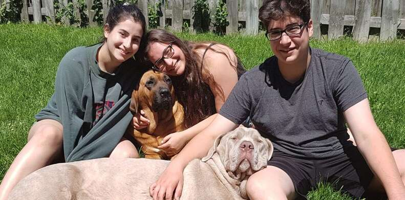Rescued mastiff dogs with their family