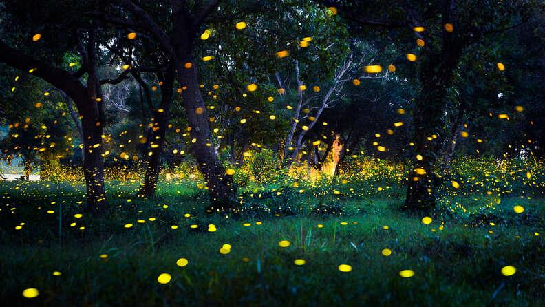 Fireflies in field