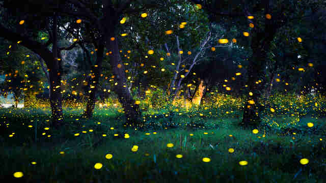 Fireflies in field