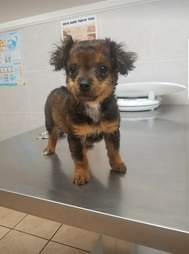 Rescued puppy at vet