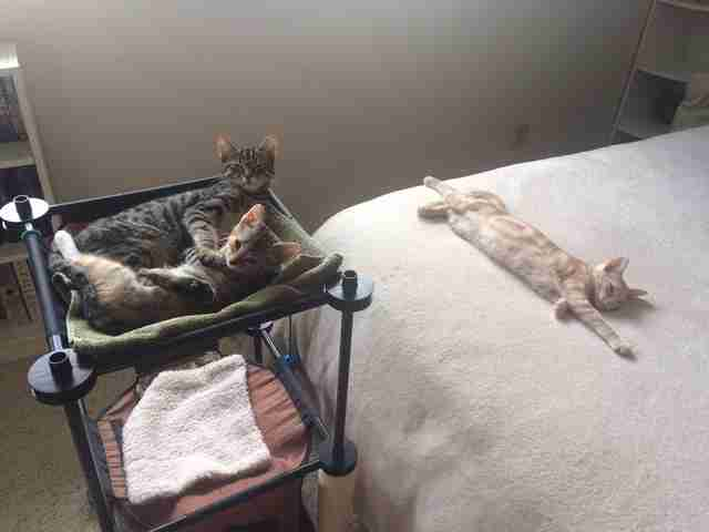 parents fill sons room with kittens