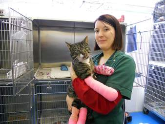 first cat at shelter stays forever