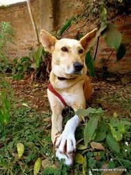 Rescued street dog