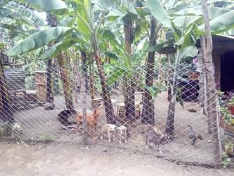 Dog shelter in Tanzania