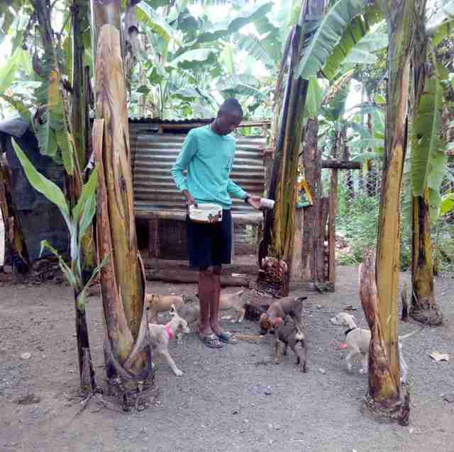 Man feeding rescue dogs