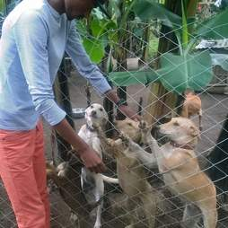 Man petting rescued dogs