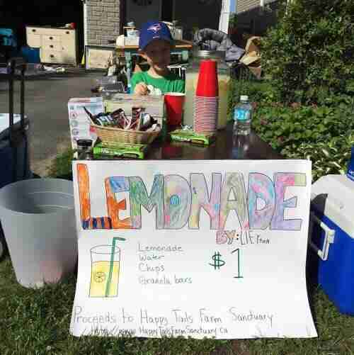 Boy's lemonade stand helps rescued farm animals