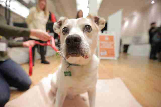 senior dog saved from abuse and neglect