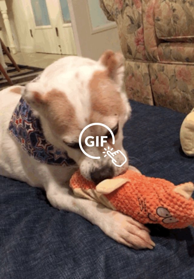 senior rescue dog plays with toys
