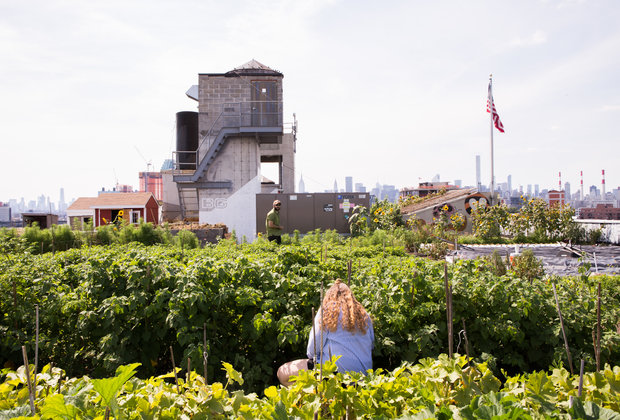 The Coolest Things to Do in NYC That Aren't Overrun by Tourists