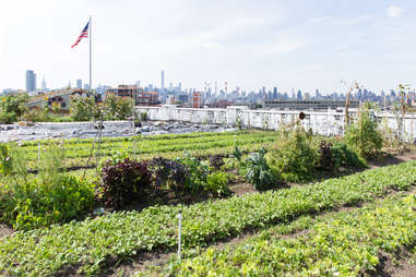 Brooklyn Grange Plants