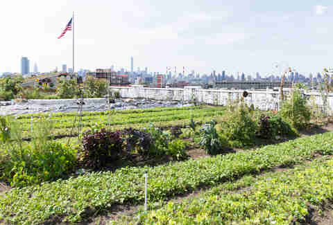 Brooklyn Grange Plants