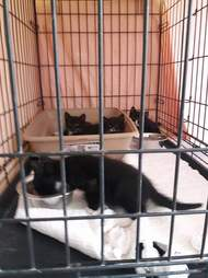 Rescued kittens in crate