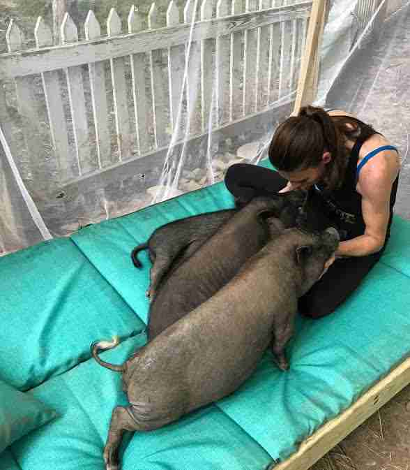 Woman cuddling rescue pigs