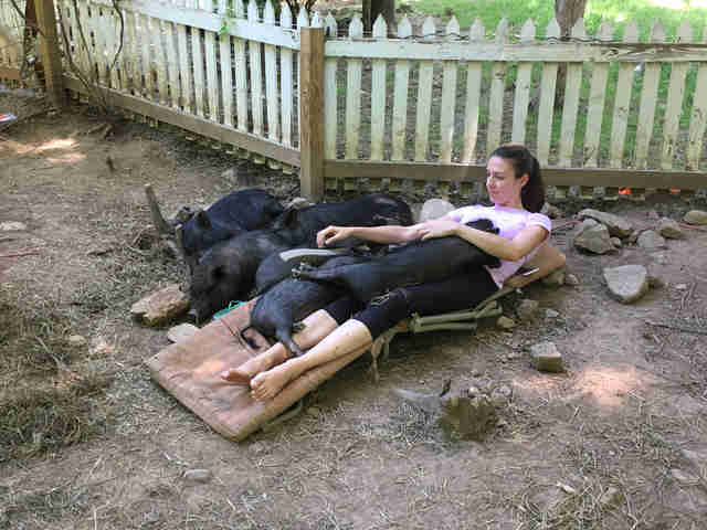 Woman cuddling with rescue pigs