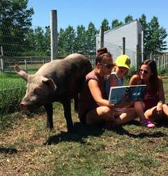 Kid reads with rescued pig