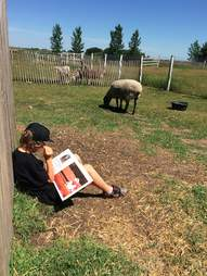 Kid reads with farm animals