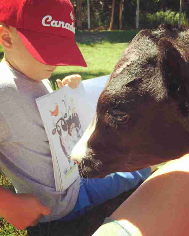 Boy reads to rescued dairy calf