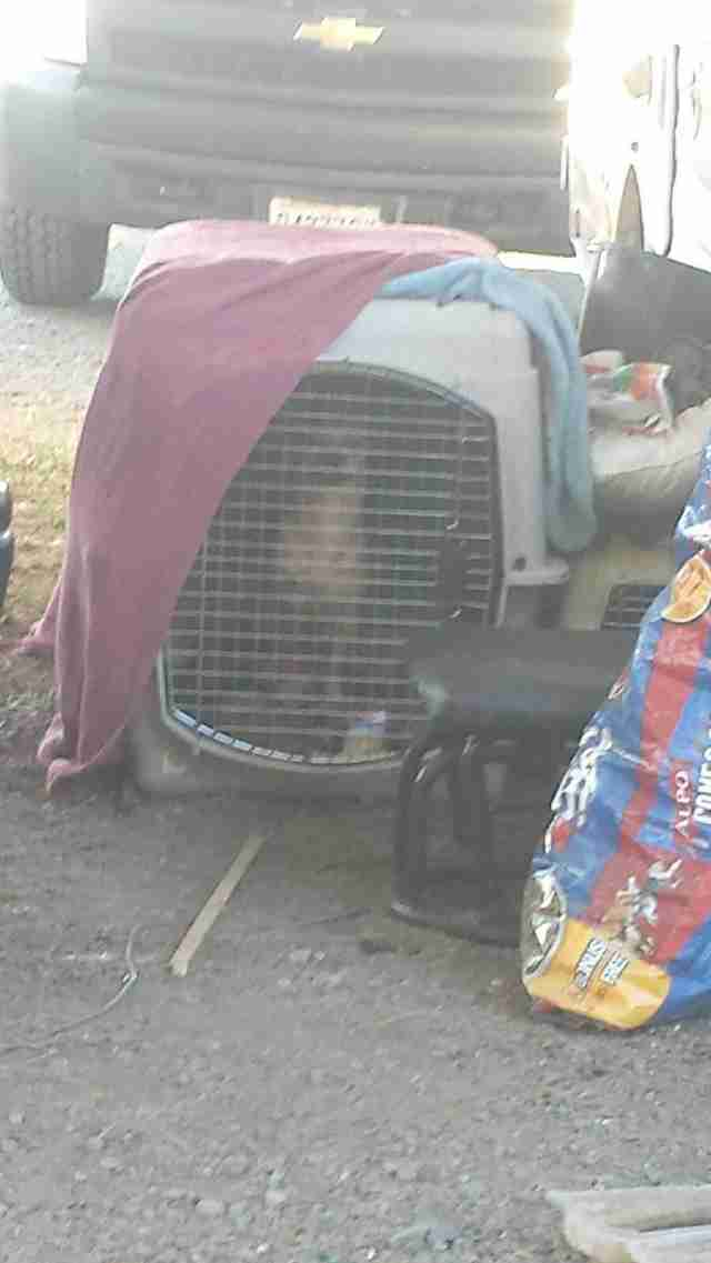 34 dogs and 2 chickens found in a trailer