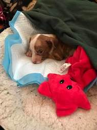 Rescue puppy in bed