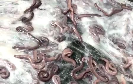 truck full of eels