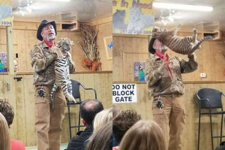 Tim Stark roughly handling tiger cub