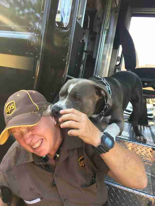 UPS driver with pit bull dog