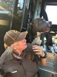 Dog greeting UPS driver