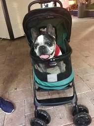 blind deaf dog gets stroller
