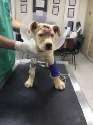 Sick, injured puppy at vet clinic