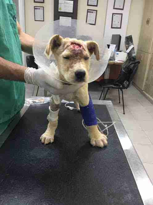 Sick, injured puppy at vet clinic