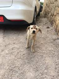 Stray puppy on road