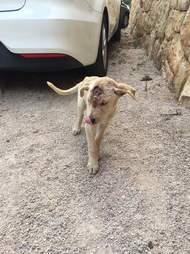 Stray dog shot in head