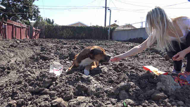homeless dog on construction site