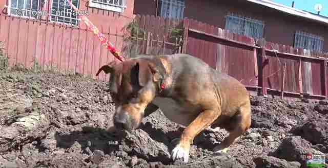 homeless dog found in construction site