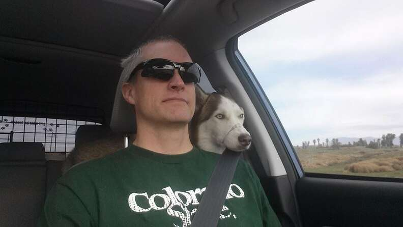 Siberian husky with owner