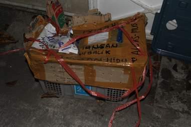 Cardboard box with slow lorises