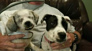 Dogs on man's lap