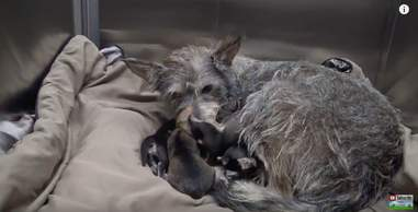 homeless dog has puppies