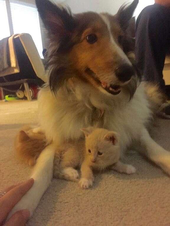 dog loves kittens