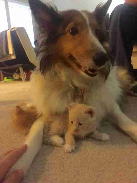 dog loves kittens