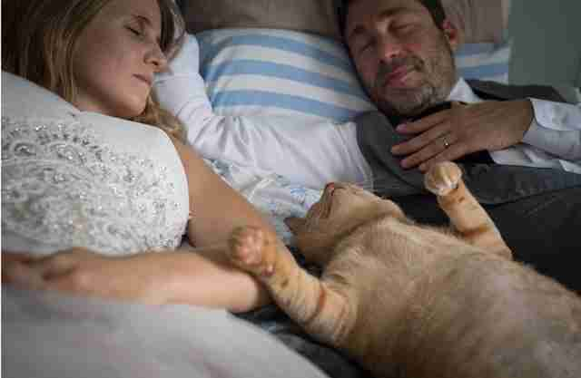 Wedding couple on bed with cat