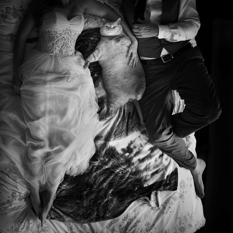 Wedding couple on bed with fat cat