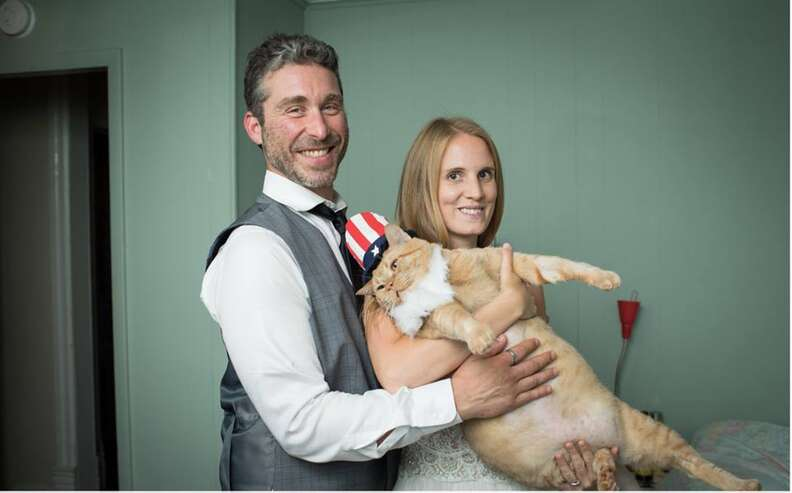 Wedding couple holding fat cat in hat