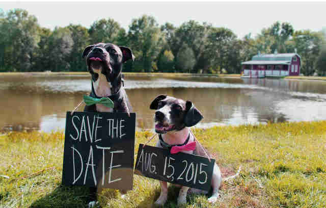 dog wedding announcement