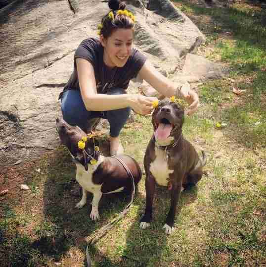 dogs in flower crowns