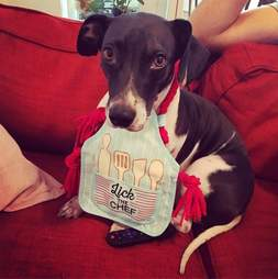 dog in apron